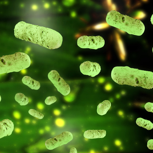 What's Going on in our Gut